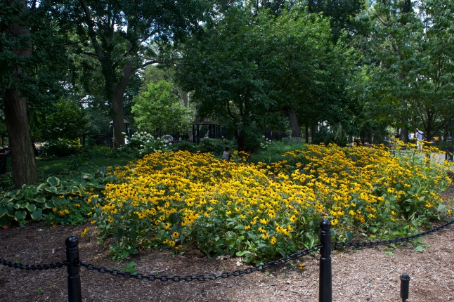 Gorgeous yellow flowers greet you at one entrance. If you look closely, you can see a couple friends chatting just behind them.